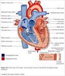 پاورپوینت-جامع-اناتومی-و-فیزیولوژی-قلب-(68-اسلاید)